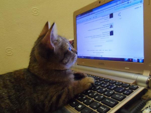 В Петербурге вводят электронную ветеринарную документацию