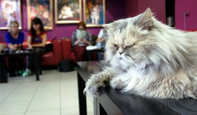 Для петербургских котов испекут торт