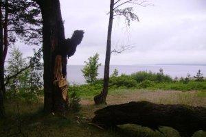 В Петербурге сильный ветер повалил уже 50 деревьев
